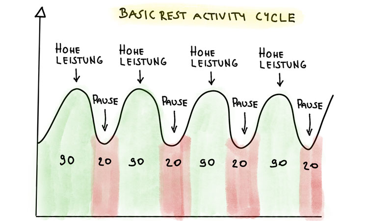 Basic Rest Activity Cycle